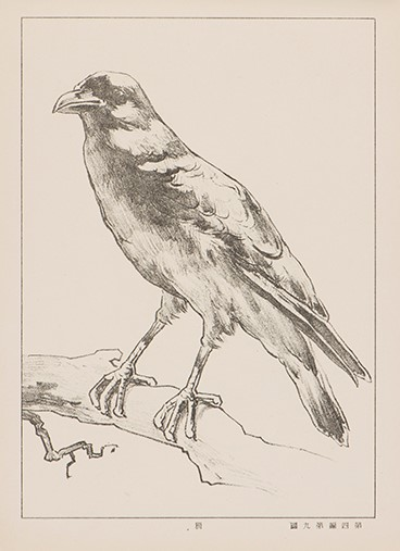 鳥を描いた図その1